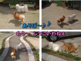 Photo_174