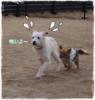 Run12_2