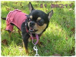 Ryokou11_2