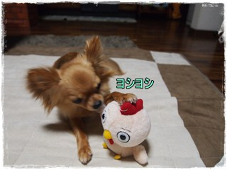 Sawakiti10