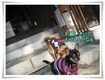 Osyougatu5