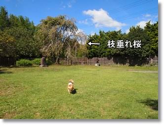 Yuhuin19_2