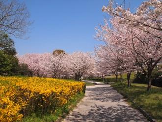 Sakura13