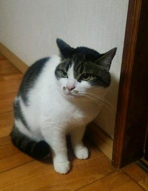 Mimi2
