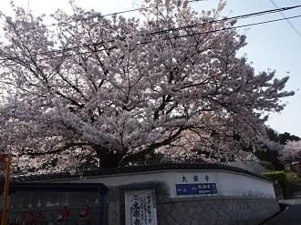 Sakusa1