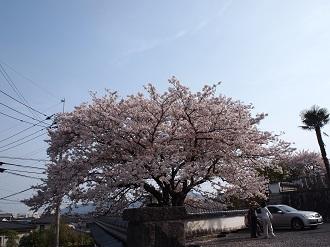 Sakusa8_2
