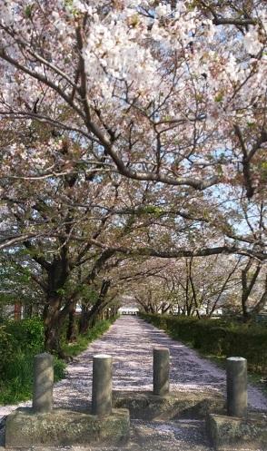 Sakura1_20200417204601