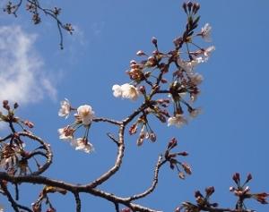 Sakura2_20210325211201