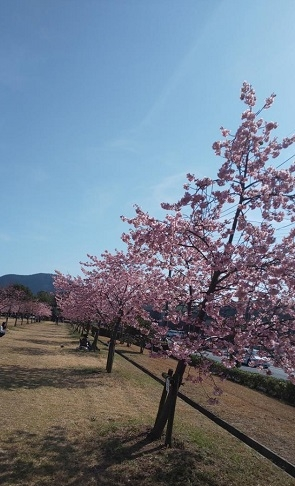 Sakura4_20200224201001